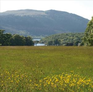 Lake-District-Wiese-und-See